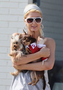 Paris Hilton with her small puppies